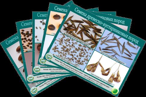 Семена Древесно-кустарниковых пород